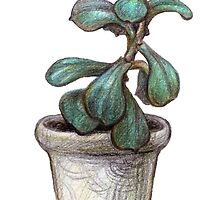 Succulent plant in pot by stasia-ch