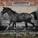Horse Wall by JerryCordeiro
