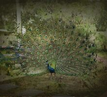 A Very Proud Peacock by Elaine Teague