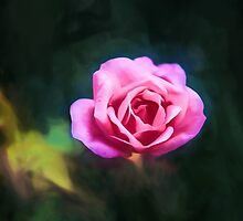 Pink Rose by Ray Warren