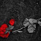 Stomped Love  by JerryCordeiro