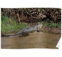 Crocodile Dining.  Poster