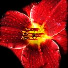 Fleur Of Rouge by JerryCordeiro
