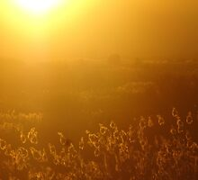 Best African Sunset  by nicolemilard21