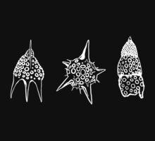 Radiolaria by Boris Edery-Mordekovich