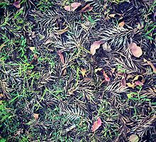 Mixed Fallen Leafs by tropicalsamuelv