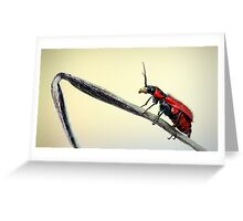 Red beetle  Greeting Card