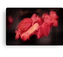 Autumn Rouge   (OP) Canvas Print