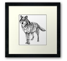 Grey wolf illustration Framed Print