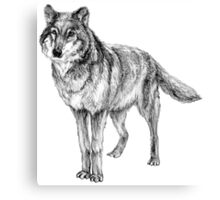 Grey wolf illustration Canvas Print