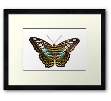 Clipper Butterfly Framed Print