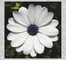 Beautiful Blossoming White Osteospermum Kids Tee