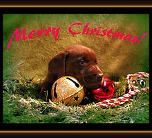Merry Christmas Chocolate Puppy! by DennisThornton