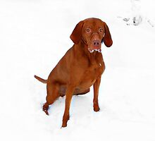 I look great in this snow....but PLEASE hurry by Yool