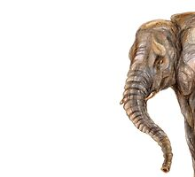 Illustration of african elefant by stasia-ch