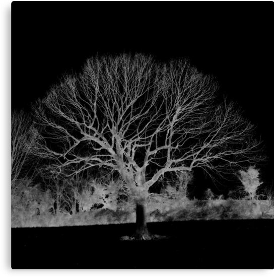 The Skeleton Tree by Kim Slater