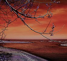 Barrier Beach - Old Woman Creek -Sunset by MSRowe Art and Design