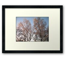 Back lighting Framed Print