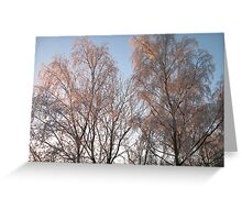Back lighting Greeting Card
