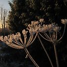 Frosty Fronds by KMorral