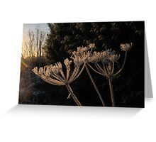 Frosty Fronds Greeting Card