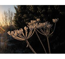 Frosty Fronds Photographic Print
