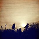 Teasel and afternoon glow by jrier