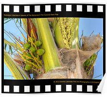 Nostalgia Collection • Islands of The Bahamas • Coconut Palm Tree in Nassau on New Providence Island Poster