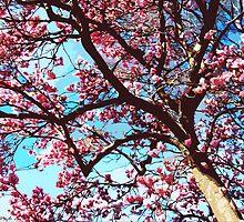 Springtime Beauty by SRowe Art