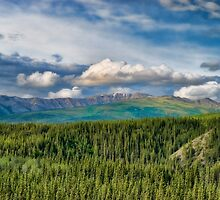 Wilderness of Denali National Park by KathleenRinker