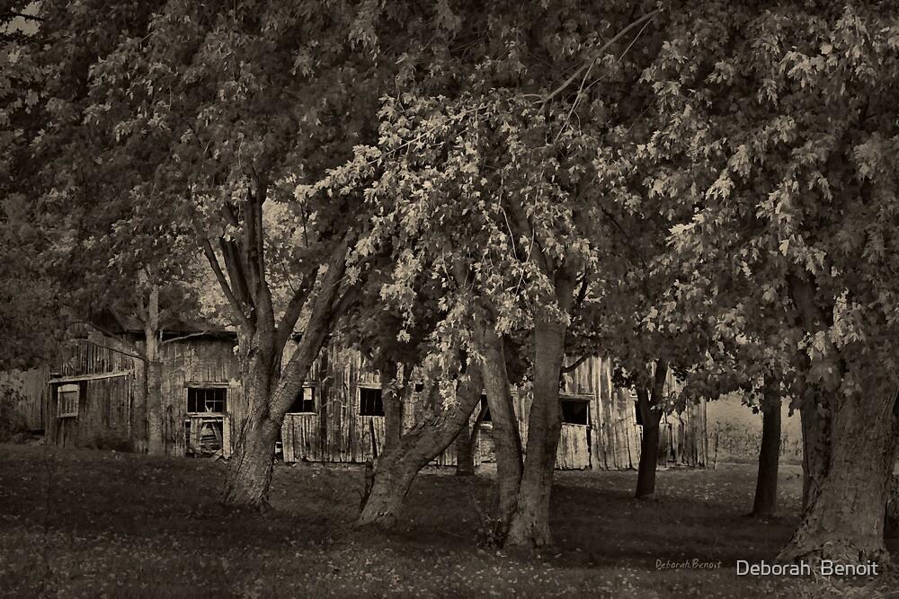 Behind The Trees by Deborah  Benoit
