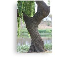 Weeping Willow at Masden Weir Goulburn Canvas Print