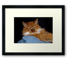 Cat In the Laundry Basket Framed Print