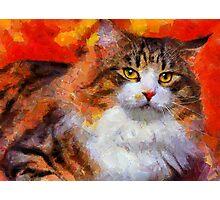 norway cat Photographic Print
