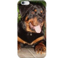 Beautiful Adolescent Female Rottweiler In Garden iPhone Case/Skin