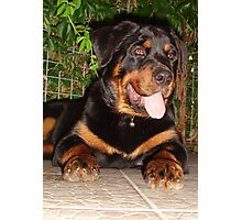 Beautiful Adolescent Female Rottweiler In Garden Photographic Print