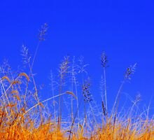 Whispers In The Wind by NatureGreeting Cards ©ccwri