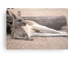 Kangaroo Lazing Metal Print