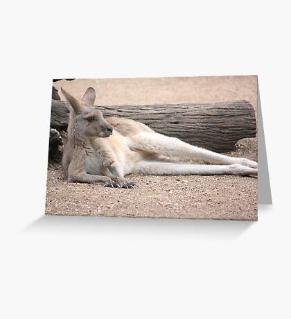 Kangaroo Lazing Greeting Card