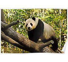 Panda! Poster