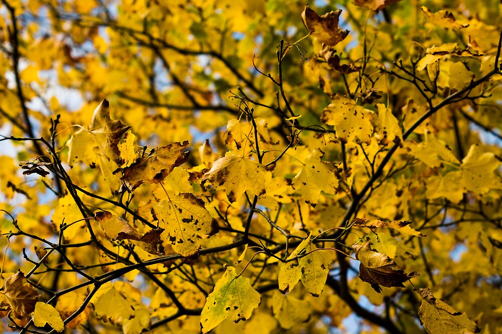 Leaves. by Stonerodger