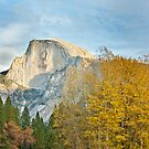 Half Dome & Aspen Grove by Spiiral