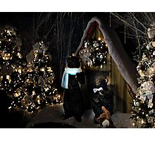 A Teddy Bear Christmas Photographic Print