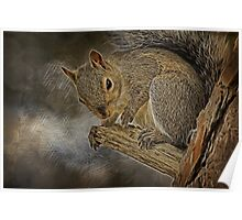 Squirrel Pose Poster