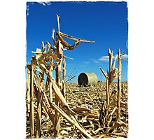 Remains of the Harvest Photographic Print