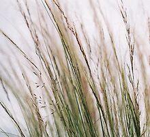 Wispy Grass by Marcus Boyle