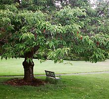 Bench under Tree by Tribble