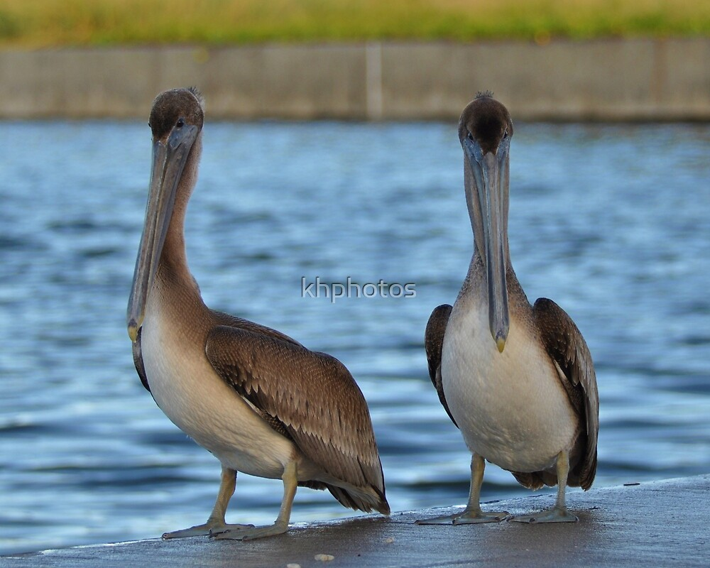 Pelicans two by two by khphotos