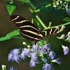 Florida butterfly by khphotos