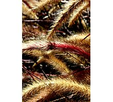 Cats Tails Photographic Print